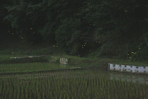 s-chinhyaku011.jpg