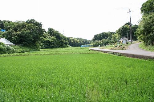 s-chinhyaku012.jpg