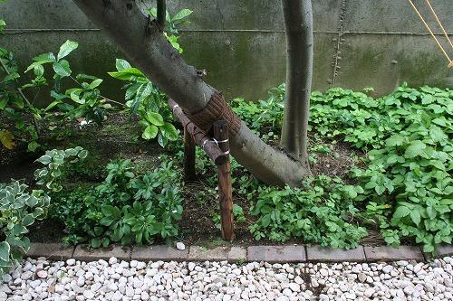 s-torii004.jpg